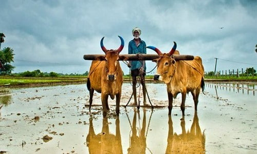 0.39% Farmers pay income tax in india